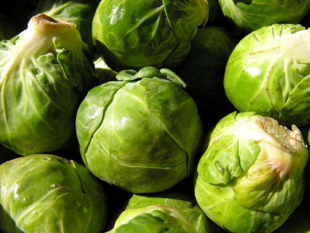 brussel sprout plant 2017