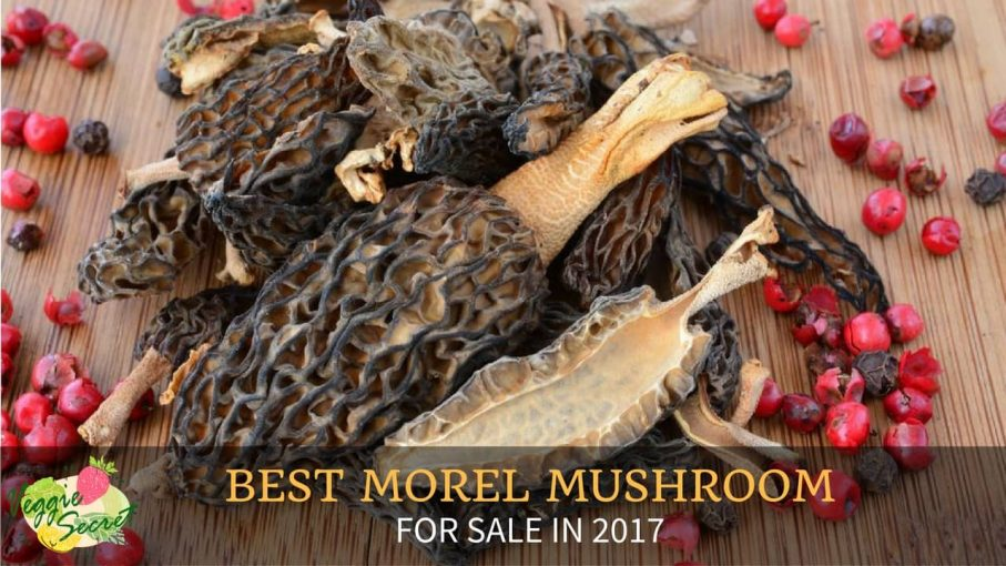 5 Best Morel Mushrooms For Sale in 2018