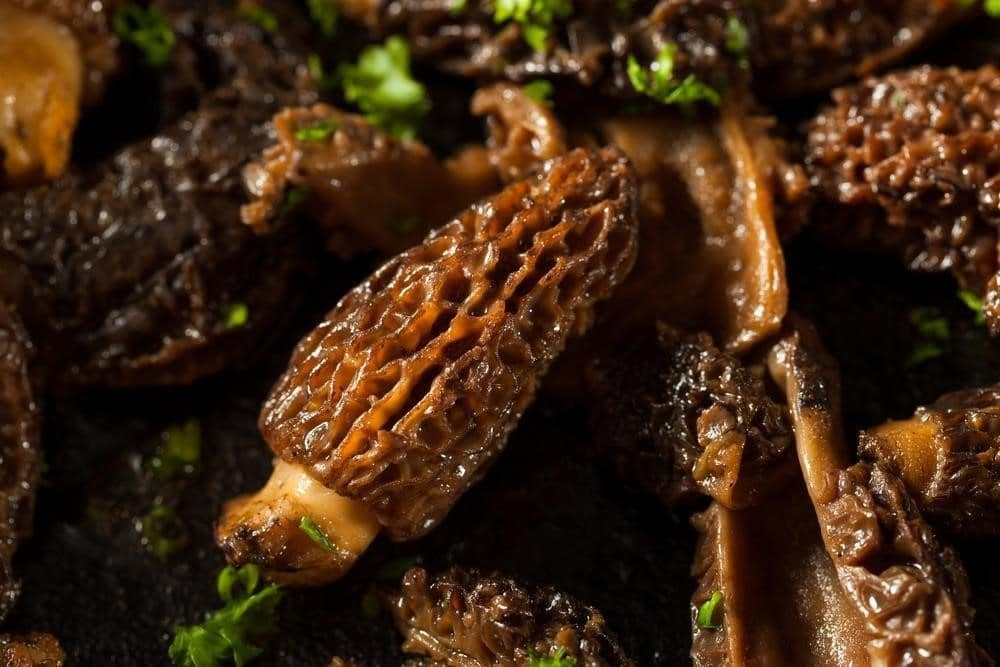 morel mushroom benifit