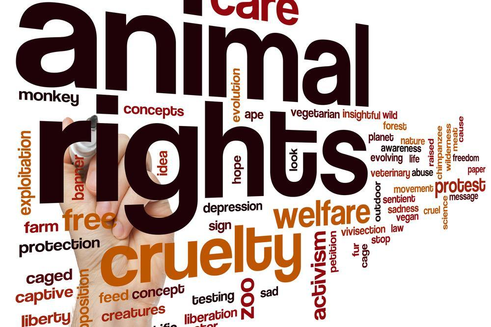 animal rights welfare